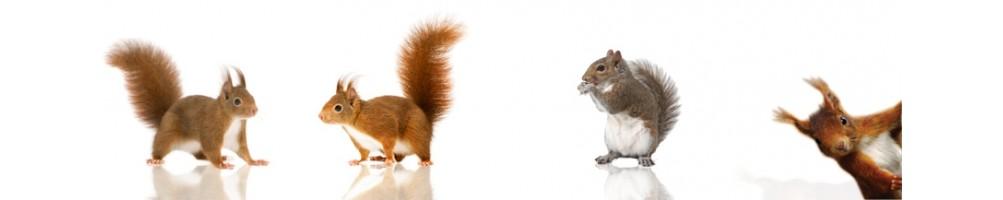 Gabbia per scoiattolo
