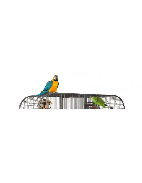 Gabbie pappagalli